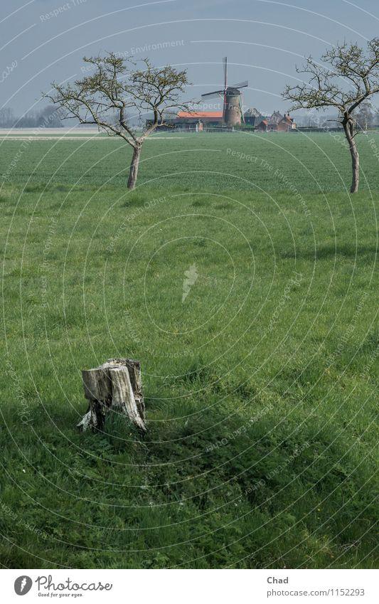Wind Mühle Wohlgefühl ruhig Meditation Ferien & Urlaub & Reisen Tourismus Ausflug Sommer Sommerurlaub Umwelt Natur Landschaft Pflanze Frühling Baum Gras