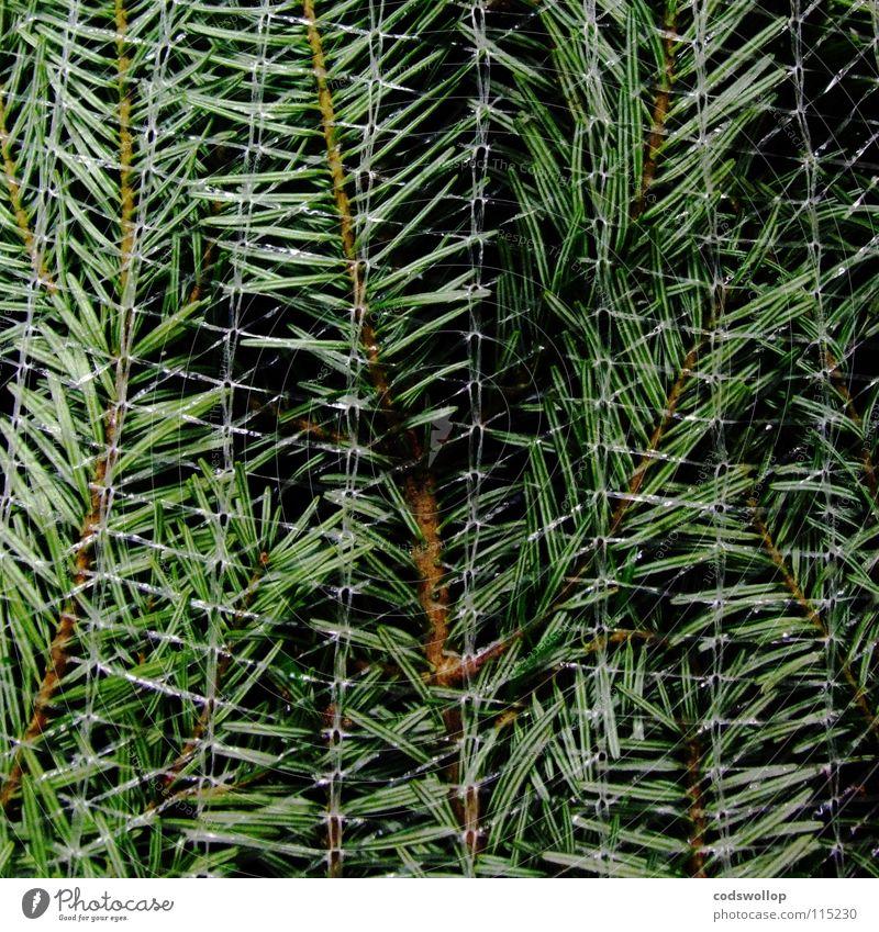 flatpack christmas Baum Winter Feste & Feiern Landwirtschaft Weihnachtsbaum Tanne Wohnzimmer Tradition nachhaltig Musikfestival Verpackung Dezember Immergrüne Pflanzen