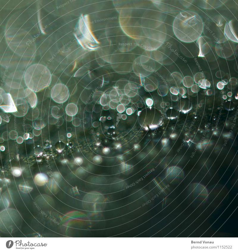 megaperls Natur Wasser Wassertropfen Pflanze Blatt hell schön grün Kreis Kugel strahlend Futurismus Farbfoto Außenaufnahme Makroaufnahme Menschenleer Tag Licht