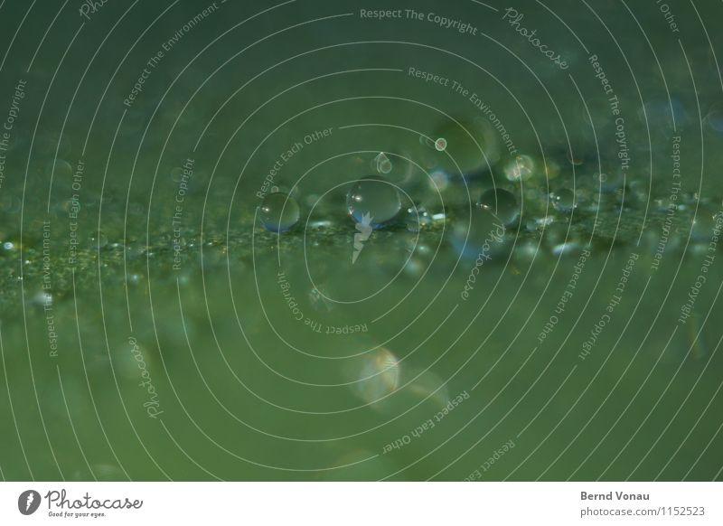wasserperlchen Wasser Wassertropfen Pflanze Blatt blau grün klein Kugel durchsichtig Ball Tau Farbfoto Makroaufnahme Menschenleer Textfreiraum oben