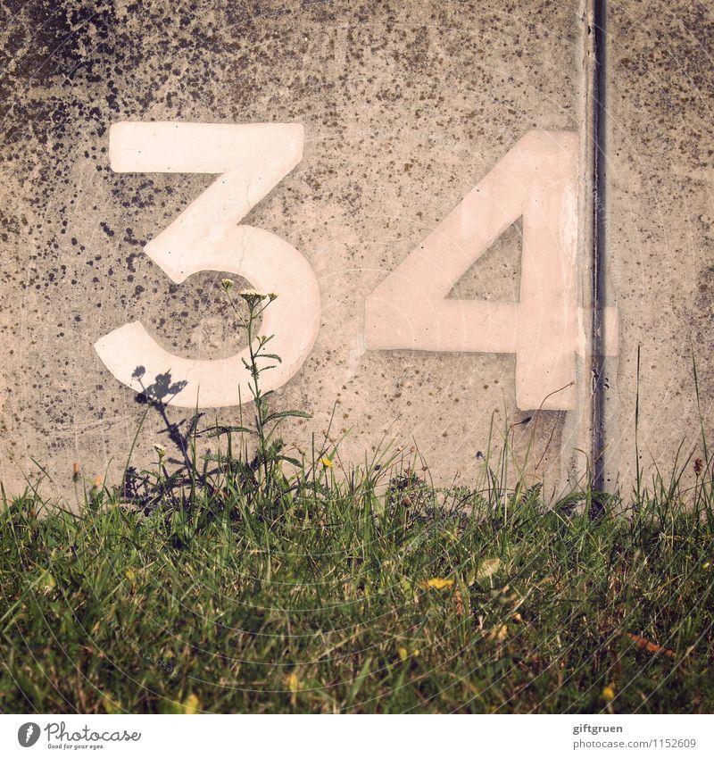selen Pflanze Blume Gras Blüte Grünpflanze Wiese Ordnung Symbole & Metaphern Schriftzeichen Ziffern & Zahlen 34 vierunddreißig Jubiläum Spalte Beton Betonwand