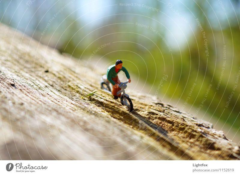 Huiiiiiiii Mensch Natur Jugendliche Mann Pflanze Sommer Landschaft Junger Mann Wald Erwachsene Frühling Wege & Pfade Sport Holz Freiheit Garten