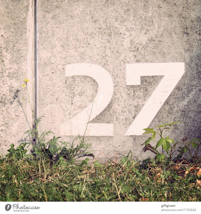 cobalt Frühling Sommer Pflanze Blume Gras Blatt Grünpflanze Wiese Ordnung Orientierung Orientierungszeichen Schilder & Markierungen Symbole & Metaphern 27