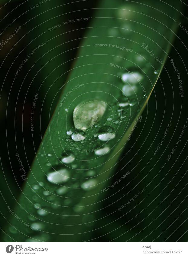 after the rain. Natur Wasser schön grün Pflanze Winter Tier dunkel kalt Herbst springen Gras Frühling Regen Wetter Wassertropfen