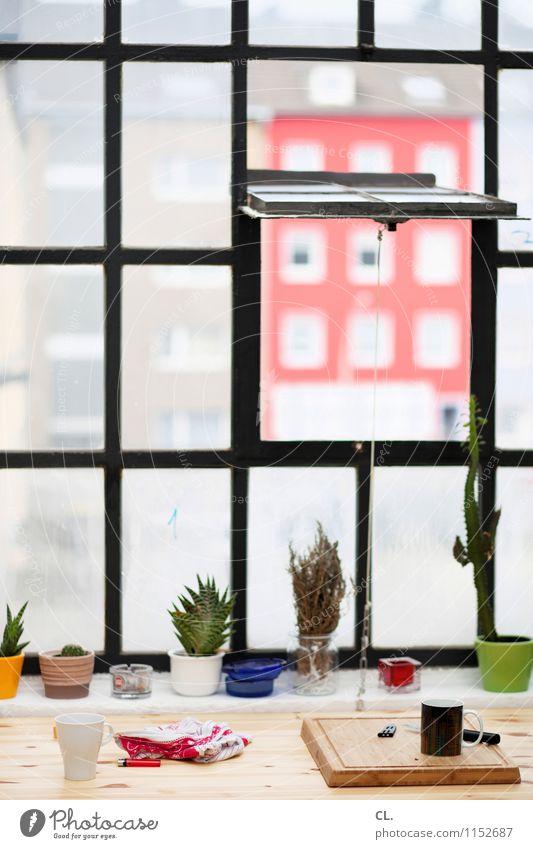 morgens am fenster Pflanze Fenster Innenarchitektur Wohnung Raum Häusliches Leben Dekoration & Verzierung Tisch Getränk Kaffee Küche Frühstück Tee Schneidebrett