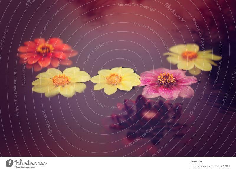 Blumenkette Natur Sommer Wasser Erholung rot gelb Traurigkeit Blüte Frühling Herbst Feste & Feiern Garten Dekoration & Verzierung Blühend Wellness