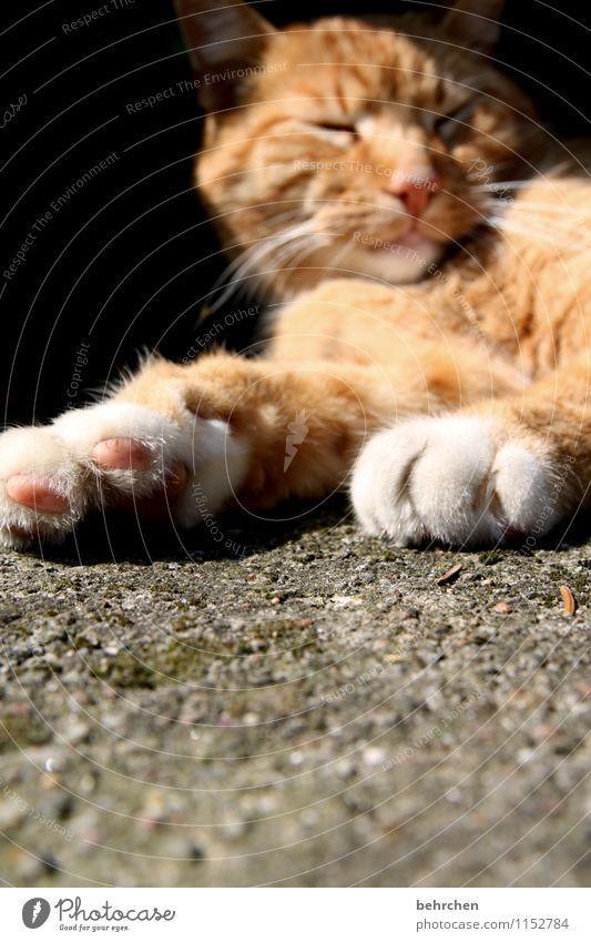 bald is wochenende, kinners... Katze schön ruhig Auge Wege & Pfade liegen träumen orange Zufriedenheit genießen schlafen Coolness Pause Nase Fell Geborgenheit