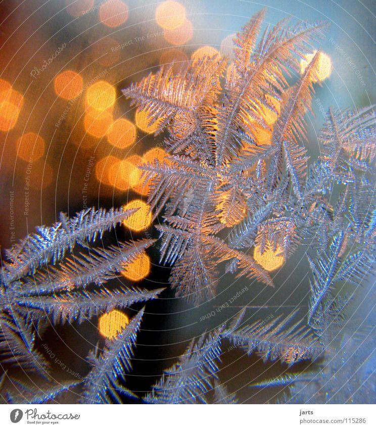 kalt und warm Winter Eis Frost Wärme Fenster Denken Vertrauen Eisblumen Eiskristall Physik Kristallstrukturen jarts Farbfoto mehrfarbig Innenaufnahme