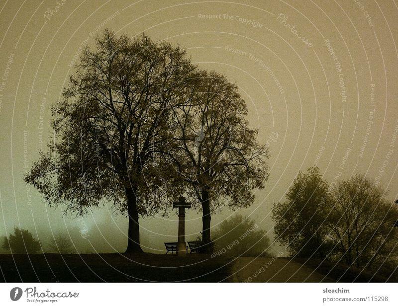Bäume bei Nacht Natur grün Baum Wiese Gras Wege & Pfade Religion & Glaube Garten Park Freizeit & Hobby Nebel Rücken Bank Möbel