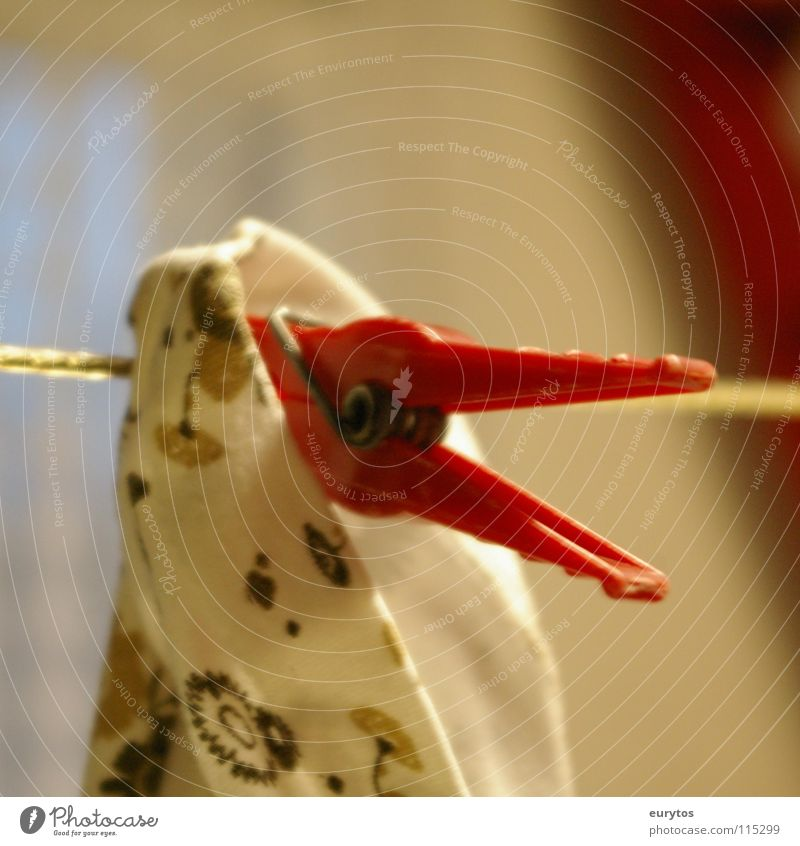 der rote Schnabel. Vogel weiß grün gelb Zusammensein Seil festhalten Schnur Ente Draht Zusammenhalt Wäsche Haushuhn trocknen