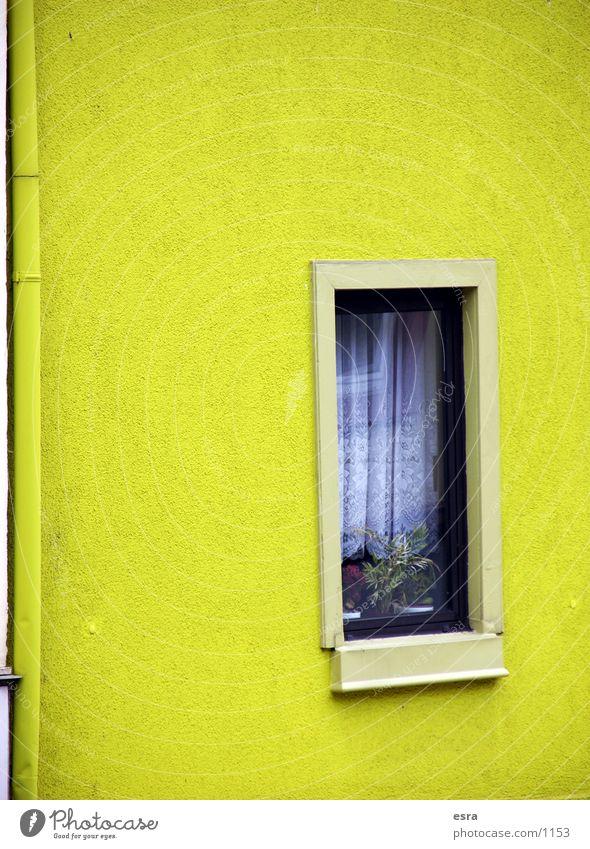 Hauswand Wand Fenster Gebäude Gardine Fensterbrett gelb Mauer Architektur
