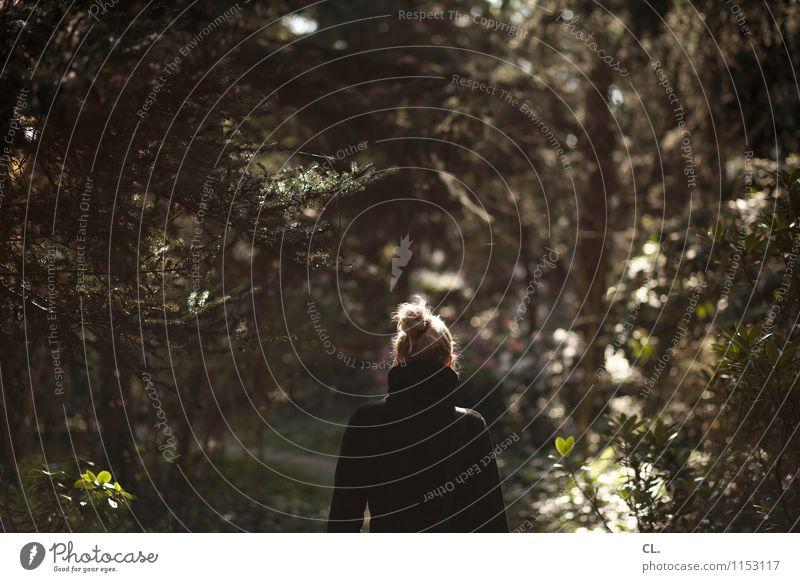 spaziergang Mensch Frau Natur Sommer Baum Erholung ruhig Wald Erwachsene Umwelt Leben Frühling feminin Wege & Pfade gehen Park