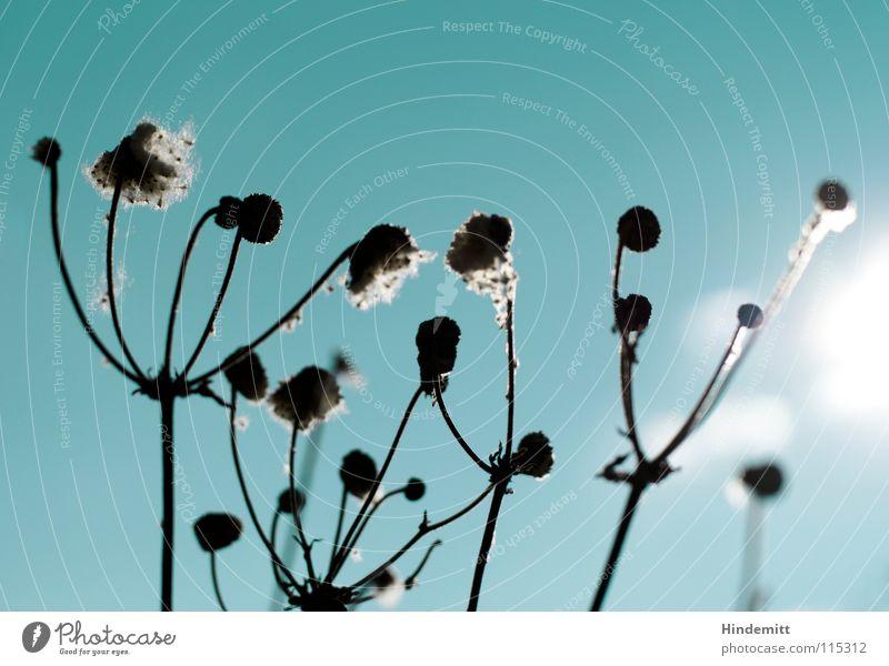 Verblüht [2] Himmel weiß grün schön Sonne Blume ruhig Winter Leben Herbst grau Blüte Denken braun Zeit offen