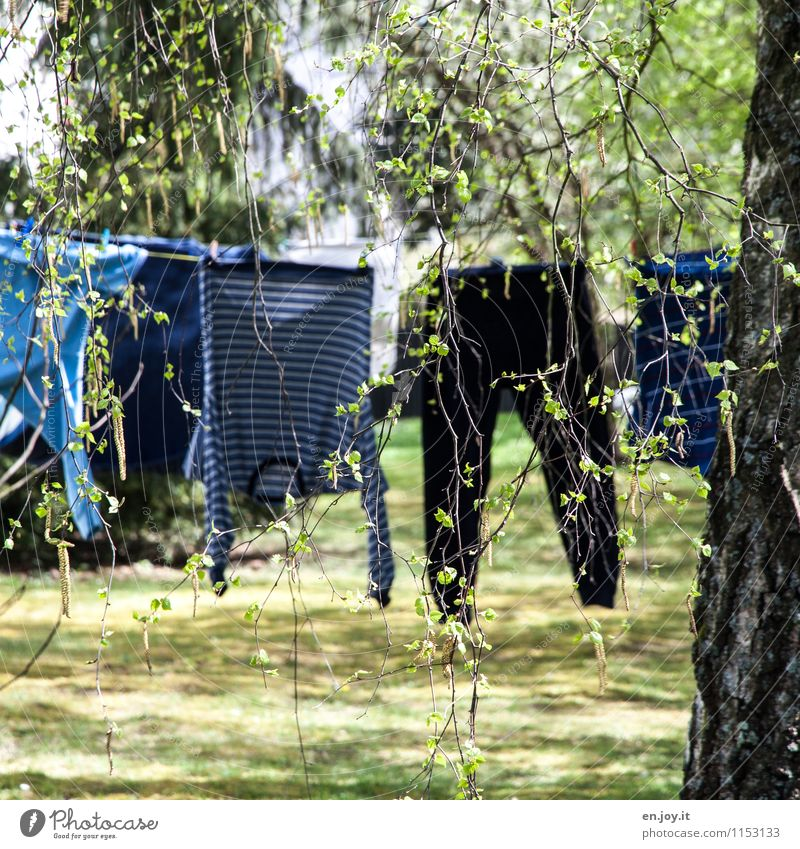 luftgetrocknet Häusliches Leben Garten Sonnenlicht Frühling Sommer Schönes Wetter Baum Gras Birke Bekleidung Hose Pullover Schlafanzug Wäscheleine hängen lustig