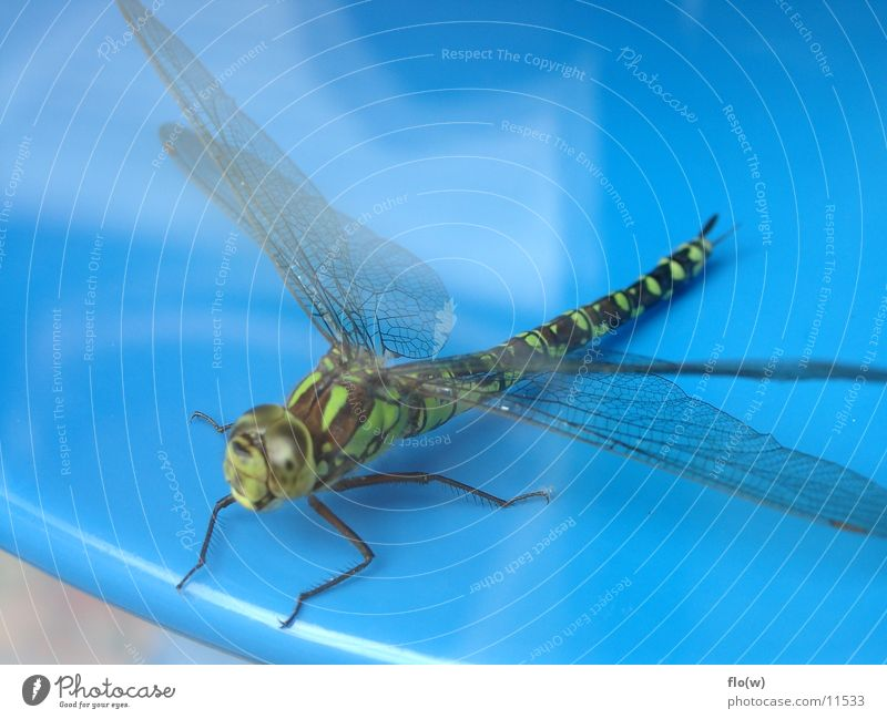 Libelle grün Tier Flügel Insekt