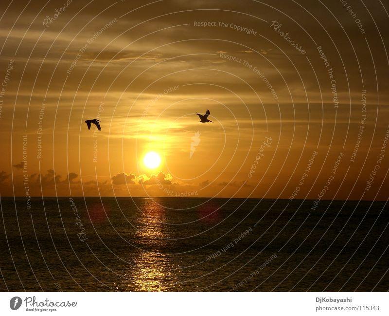 Seele baumeln lassen Himmel schön Sonne Meer Wolken Stimmung Vogel Sonnenuntergang