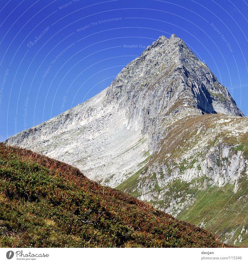 Schweizer Bergspitze Himmel Blume blau Sommer ruhig Berge u. Gebirge grau Felsen Macht Spitze Gipfel massiv Bergkamm Geröll