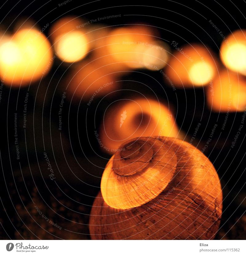 Innebeleuchtung Schneckenhaus Licht Beleuchtung Physik Lichterkette Nachbar dunkel rund zerbrechlich schön Wohnung Tier Makroaufnahme Nahaufnahme