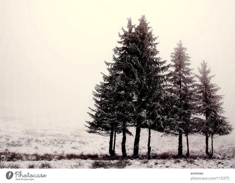 Oh Tannenbaum Winter ruhig Einsamkeit kalt Schnee Wiese Landschaft Stimmung Nebel