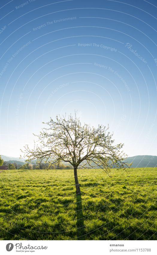 Frühlingsmorgen Himmel Natur blau Pflanze grün Sommer Baum Landschaft Ferne Berge u. Gebirge Wiese Gras klein Garten Freiheit