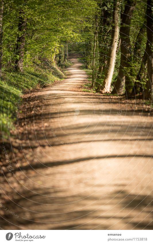 Waldweg Ferien & Urlaub & Reisen Tourismus Ausflug Ferne Freiheit Natur Landschaft Pflanze Erde Baum Park Verkehrswege Wege & Pfade lang tief Laubwald Fußweg