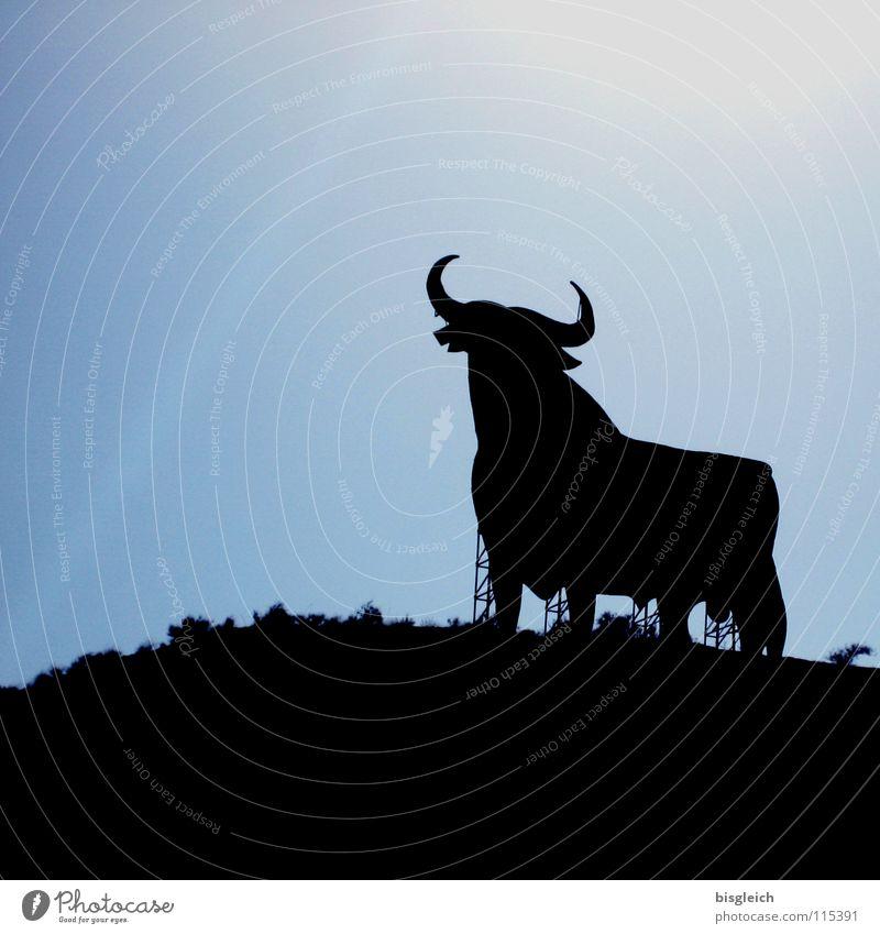 El Toro (Spanien) Himmel blau Tier Kraft Schilder & Markierungen Werbung stark Bulle Nutztier Andalusien Stierkampf Sherry