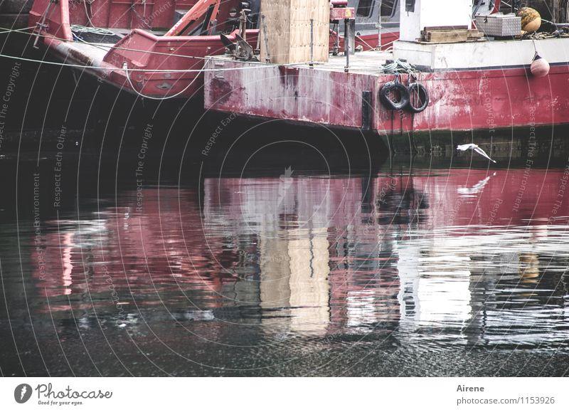 im Trüben fischen Fischereiwirtschaft Fischerboot Wasser schlechtes Wetter Nebel Hafen Schifffahrt Wasserfahrzeug Tier Vogel Möwe Möwenvögel 1 Metall Rost