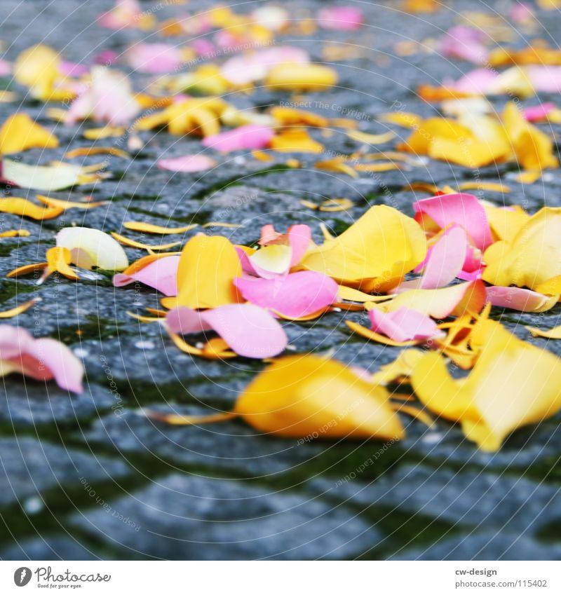 du wolle rose kaufn? Blatt gelb Herbst Gefühle Blüte Feste & Feiern liegen rosa mehrere Dekoration & Verzierung Romantik Rose Symbole & Metaphern zart Bürgersteig Lebensfreude