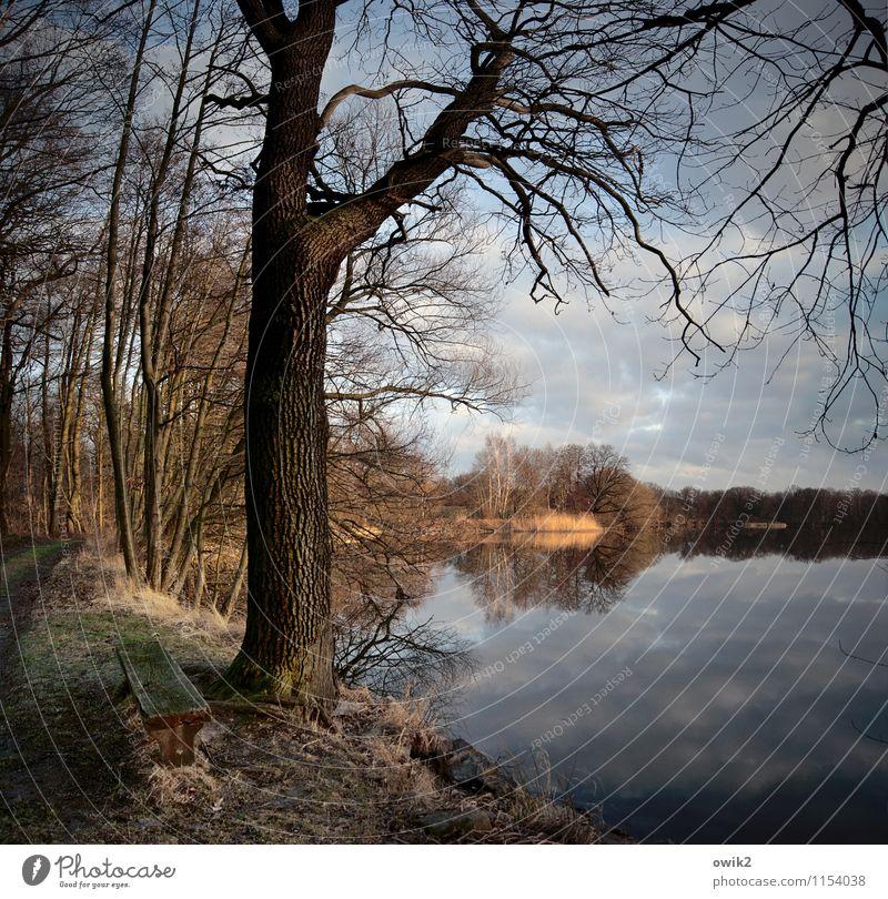 Draußen Umwelt Natur Landschaft Pflanze Himmel Wolken Horizont Schönes Wetter Baum Sträucher Holz Ast Zweige u. Äste stehen Wachstum Ferne Idylle ruhig