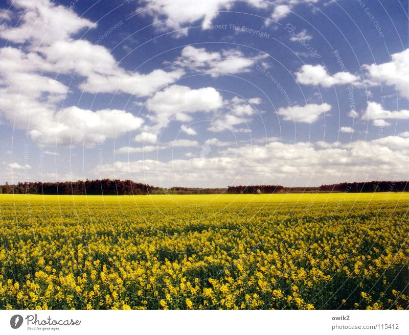 Früher Raps Energiewirtschaft Erneuerbare Energie Umwelt Natur Landschaft Pflanze Himmel Wolken Horizont Sonnenlicht Frühling Klima Schönes Wetter