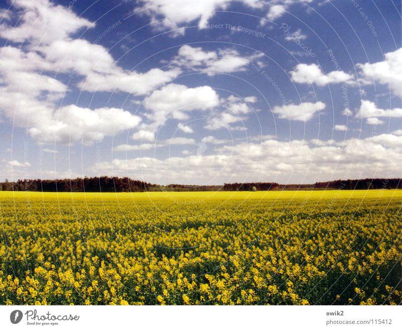 Früher Raps Natur Himmel grün blau Pflanze schwarz Wolken Ferne gelb Blüte Frühling Landschaft Feld Deutschland Umwelt Horizont