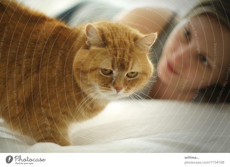 die diva Katze Junge Frau beobachten Haustier Stolz Tierliebe majestätisch 1 Mensch Ein Tier