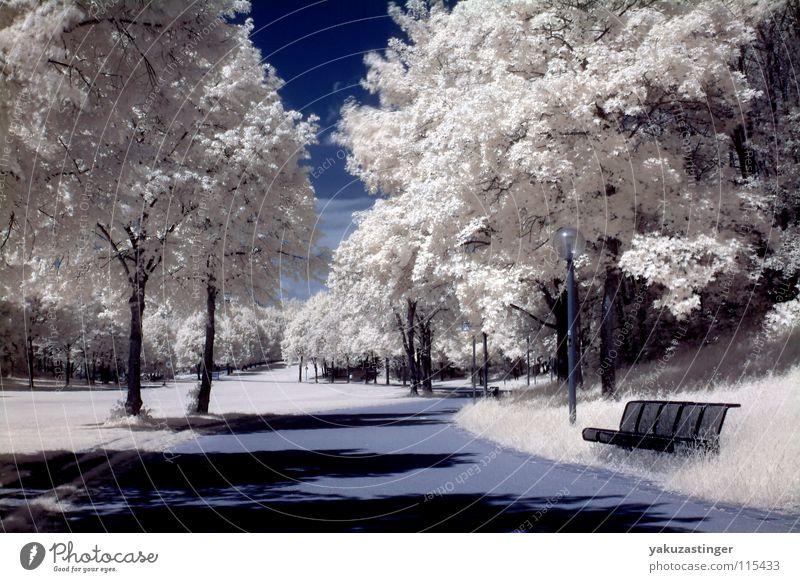white nights Infrarotaufnahme Farbinfrarot Baum Park Wiese Sträucher Gras weiß Langzeitbelichtung Himmel blau Channelshifting Bank