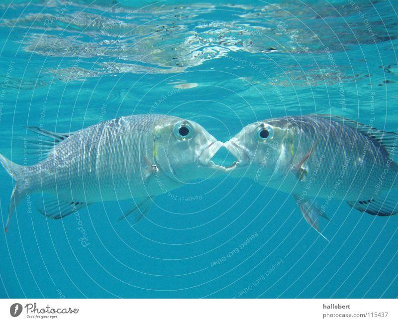 Malediven Water 09 Meer Riff tauchen Schnorcheln Ferien & Urlaub & Reisen Tierschutz Fisch Wasser Unterwasseraufnahme traumurlaub meer von unten deep blue sea