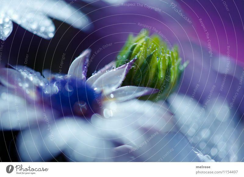 namenslos Wassertropfen Frühling Blume Blatt Blüte Wildpflanze Topfpflanze Blütenblatt atmen Blühend Erholung glänzend verblüht Wachstum exotisch schön kalt