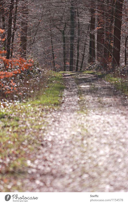 Aprilwald Natur Landschaft Frühling Pflanze Baum Wildpflanze Ast Zweige u. Äste Wald Fußweg Waldrand Wege & Pfade Spazierweg Frühlingsgefühle ruhig Beginn