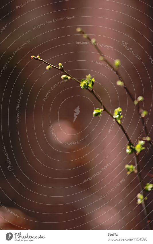 Neubeginn Natur Pflanze grün Blatt Wald Frühling braun Beginn Wandel & Veränderung neu Zweig Vorfreude Blattknospe Frühlingsgefühle Zweige u. Äste April