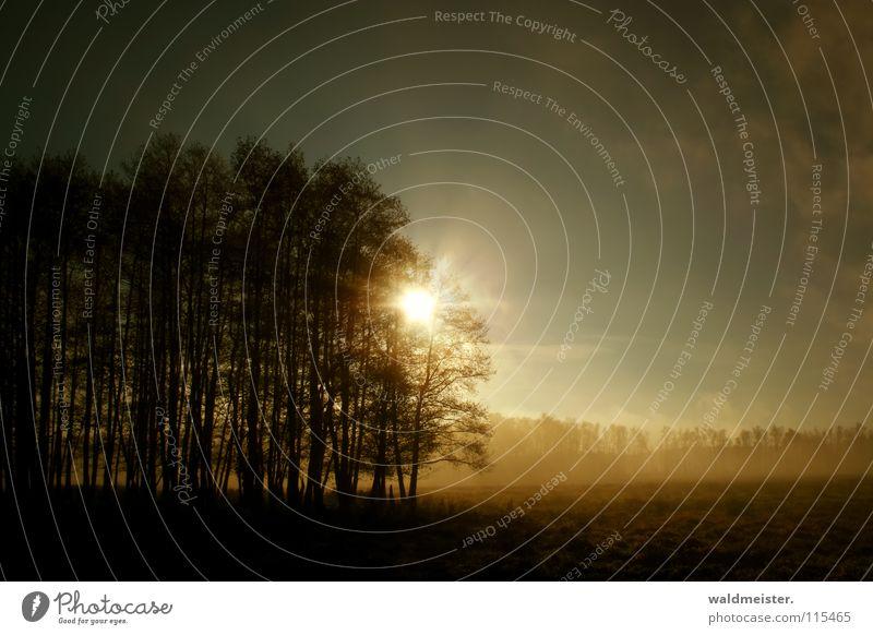 Wäldchen am Morgen Baum Sonne Sommer Wald Herbst Wiese Nebel Romantik Morgennebel Erlen