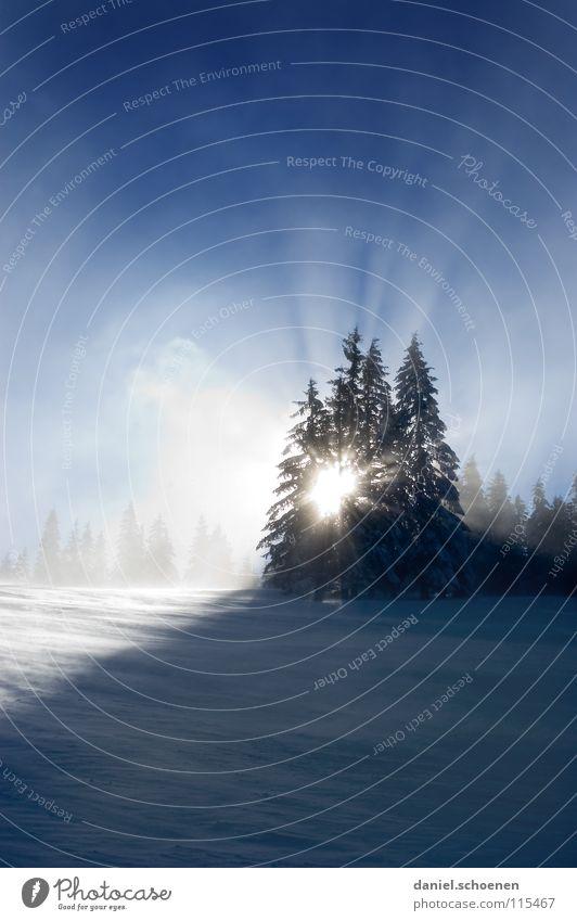 Weihnachtskarte 27 (die allerallerallerletzte !) Himmel Natur Ferien & Urlaub & Reisen blau weiß Sonne Baum Einsamkeit Winter kalt Berge u. Gebirge Schnee