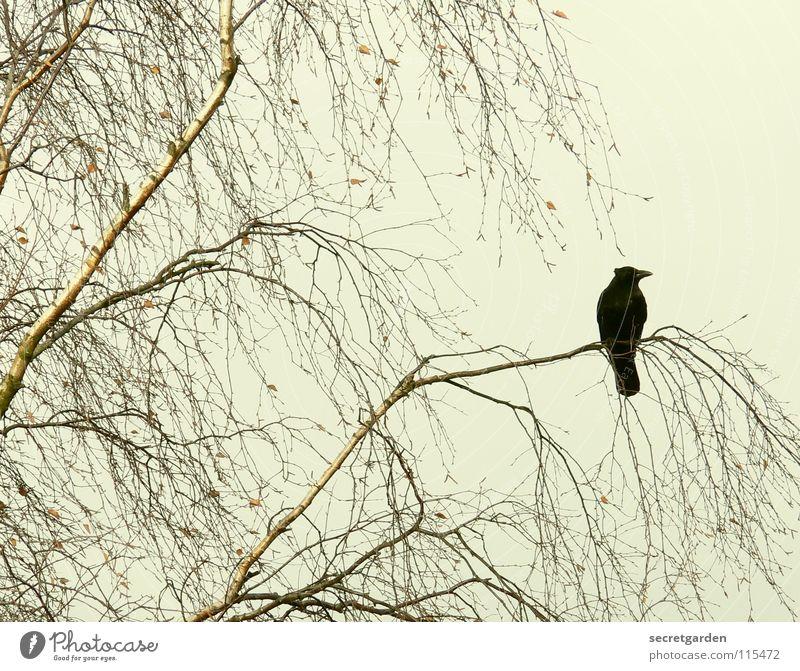 abrakadabra Krähe Rabenvögel Vogel Baum Blatt laublos Winter Herbst hocken hockend Raum schlechtes Wetter Wolken ruhig Erholung Trauer Langeweile Pause