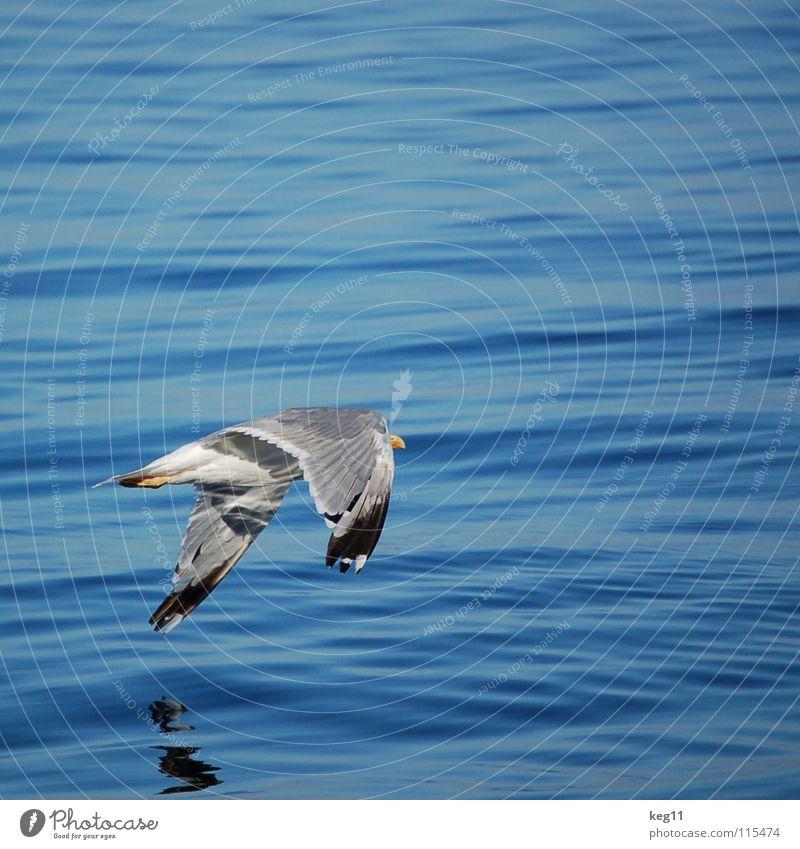 abheben ... Himmel Natur Wasser blau Freude Strand Ferien & Urlaub & Reisen Meer Berge u. Gebirge Bewegung Küste Wetter Wellen Vogel Wind fliegen
