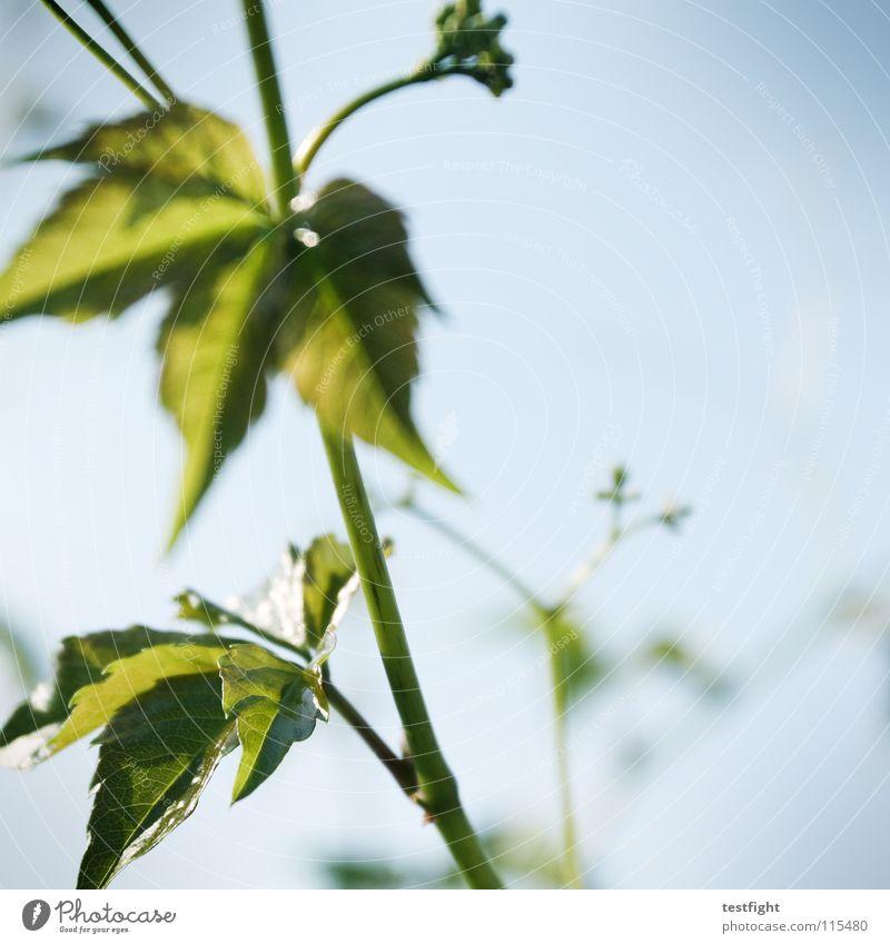 winterpause Natur blau Pflanze grün Sommer Wärme Garten Physik