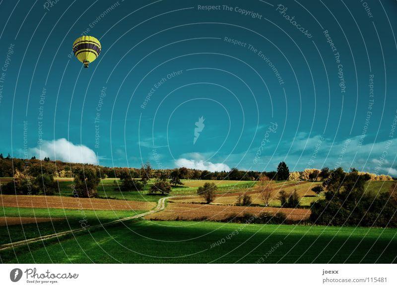 Zur Sonne, zur Freiheit aufsteigen Baum Feld gelb Gras grün Ballone himmelblau Landschaft Landwirtschaft Leichtigkeit Luft Flugzeug Lust Schweben Sommer ruhig