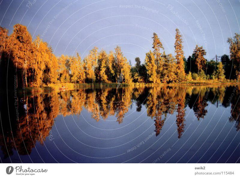 Abendlicht ruhig Sonne Lampe Umwelt Natur Landschaft Wasser Baum Sträucher Wald Küste See friedlich Frieden Birke Wald-Kiefer Mischwald Sonnenuntergang