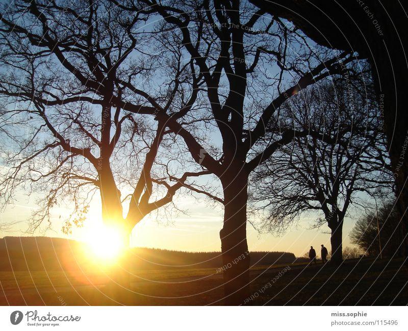 es ist herbst, franz Natur Himmel Baum Sonne ruhig gelb Farbe Wald Herbst Wiese Landschaft Freundschaft Zufriedenheit Wetter gold Fröhlichkeit