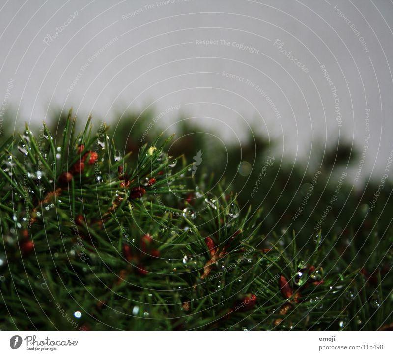 aufsaugen Natur Wasser grün Pflanze Herbst Traurigkeit Regen Wassertropfen Trauer trist Sträucher nah Ödland
