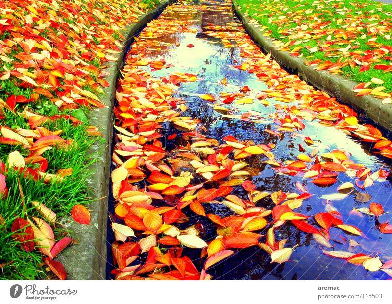 Blätterfluss Wasser Blatt Farbe Herbst Gras Fluss Bach Abwasserkanal Herbstlaub