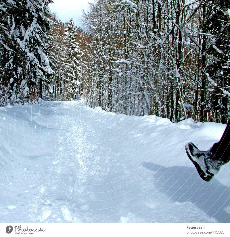 Neuschnee Natur weiß Baum Winter Wald kalt Schnee Landschaft Wege & Pfade Beine Fuß Wetter Schuhe Eis wandern Frost