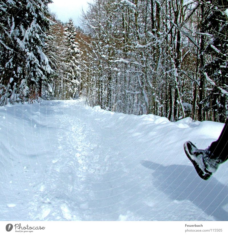 Neuschnee Winter Schnee wandern Beine Fuß Natur Landschaft Wetter Schönes Wetter Eis Frost Baum Wald Wege & Pfade Schuhe Wanderschuhe kalt weiß Flocke Fußweg
