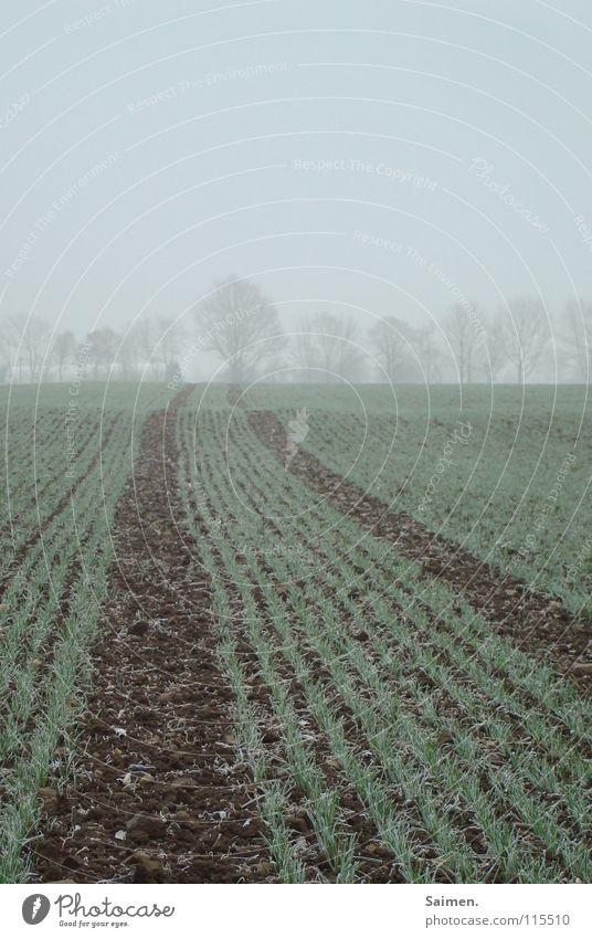 silhouette of trees in silence Natur Baum kalt Herbst Feld Nebel Perspektive Trauer Frost zart verwundbar